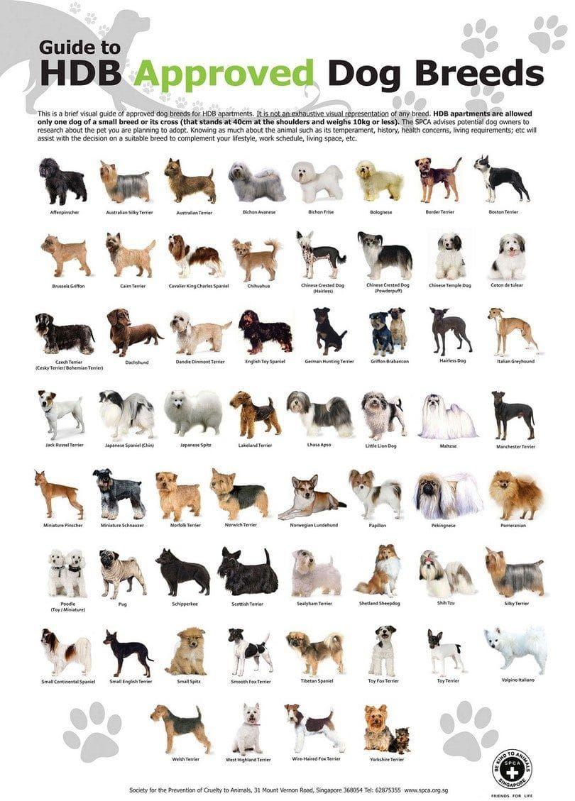 HDB panes para perros Aprobado