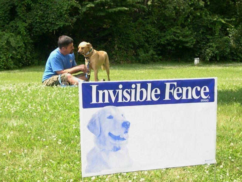 vallas invisibles para perros