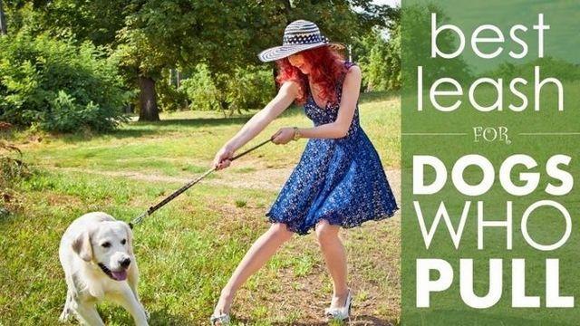 Mejor correa para perros que tiran: 5 grandes opciones para reinar en un perro demasiado entusiasta