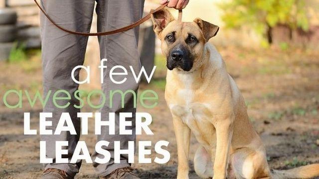 Las mejores correas de perro de cuero: 5 opciones de lujo y robustas