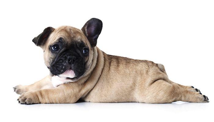Los mejores nombres de perro macho