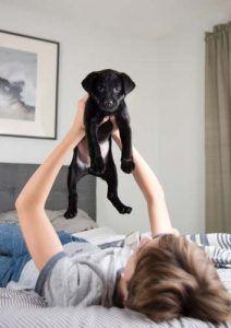 Nuevo nombre del perro de perrito