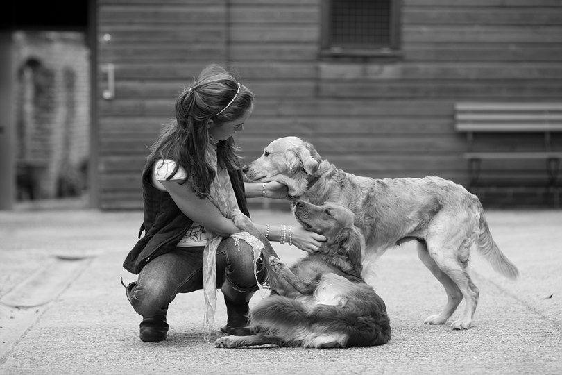 Los mejores perros de tamaño medio: los más populares y queridos 5 razas en el mundo