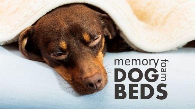 Las mejores camas para perros de espuma de memoria: 4 estaciones cómodas del sueño para su cachorro