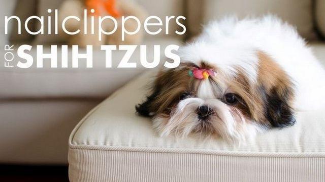Mejores cortaúñas para tzu de shih: proteger las patas de su cachorro