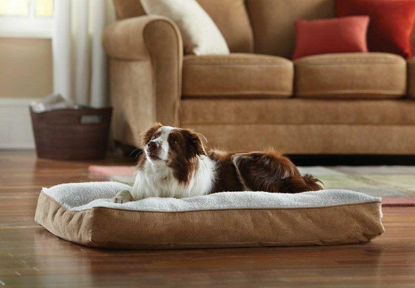 Perro en cama ortopédica