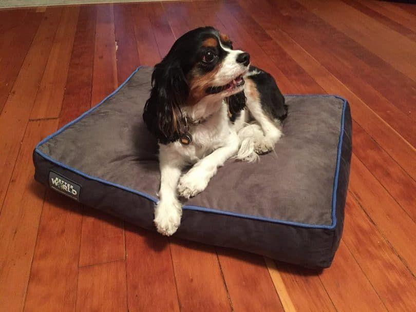 Primera Calidad-6 Grueso ortopédicas perro cama