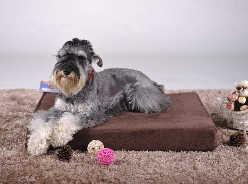 Cama para perros - ortopédico de espuma de memoria extra grande 40x35x4 con revestimiento impermeable duradero