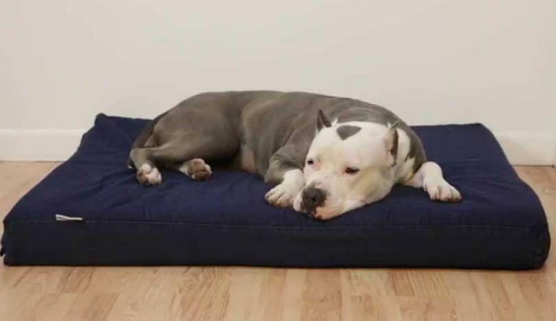Prima ortopédico de espuma de memoria cama a las dogbed4less