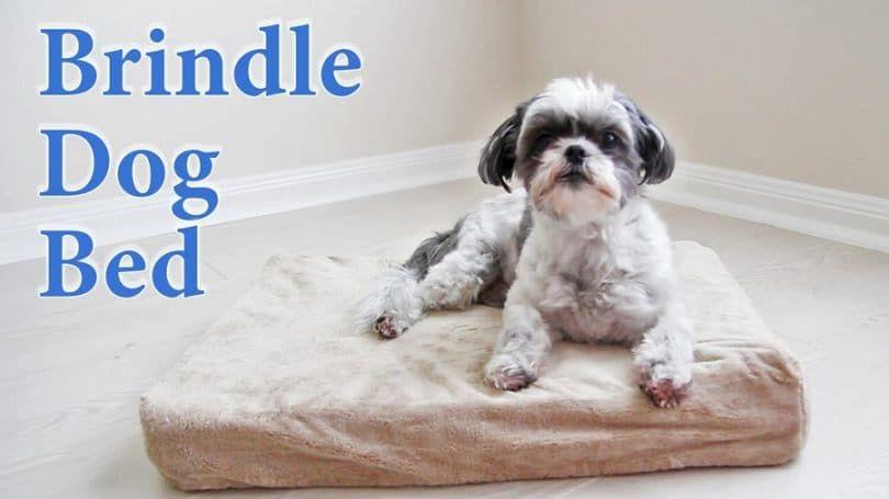 Brindle 4 pulgadas Solid Memory Foam Cama ortopédica del perro