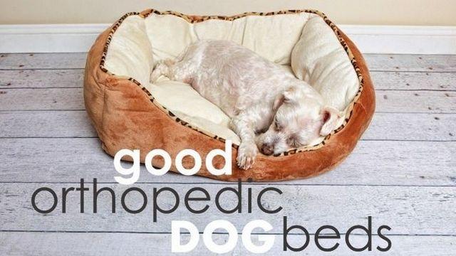 Las mejores camas ortopédicas perro (los perros grandes amarán estas ...)