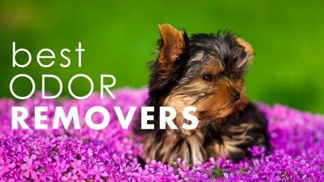 Las mejores neutralizadores de olores de mascotas: deshacerse de los olores para siempre!