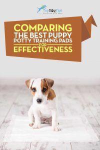 Top Mejor Cachorro entrenamiento insignificante Pad Comparación