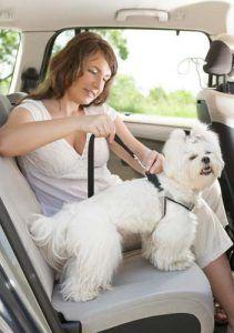 las pruebas del cinturón de seguridad del perro en el coche