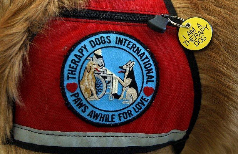 Los mejores perros de terapia: ¿cuáles son los perros que podemos confiar?