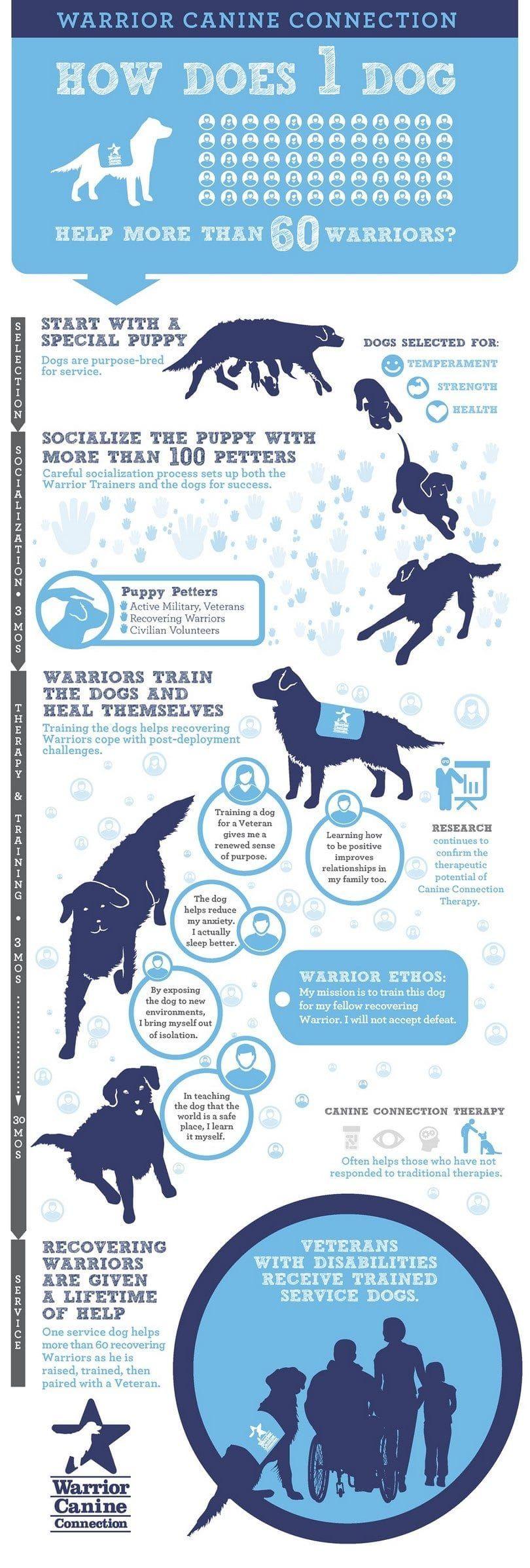 Un perro ayuda a muchos infografía