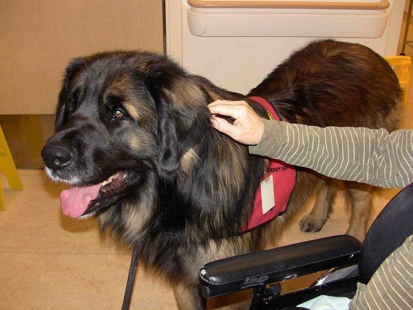 terapia del perro grande