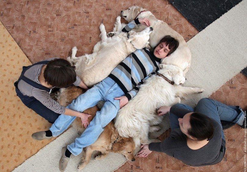 Los perros de terapia muchacho de ayuda