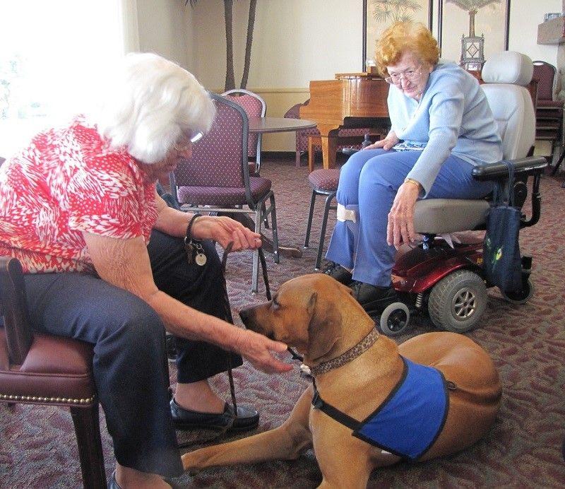 perro de terapia con personas mayores
