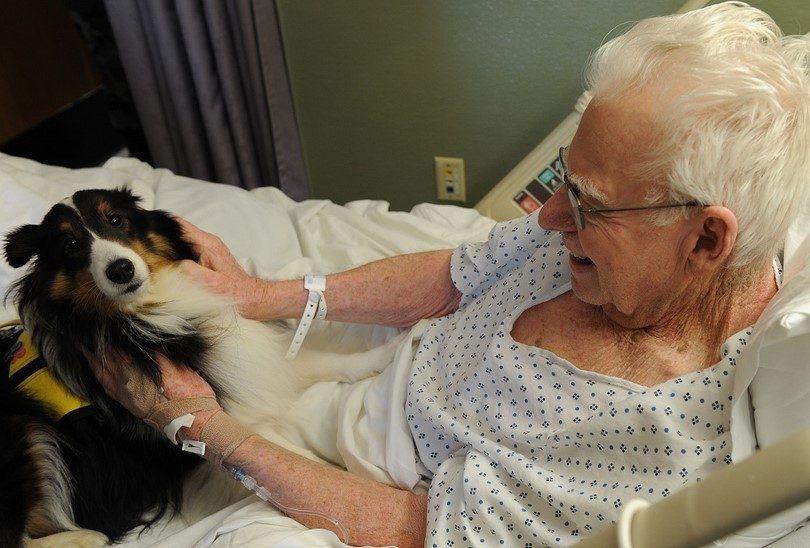 Collie perro de terapia