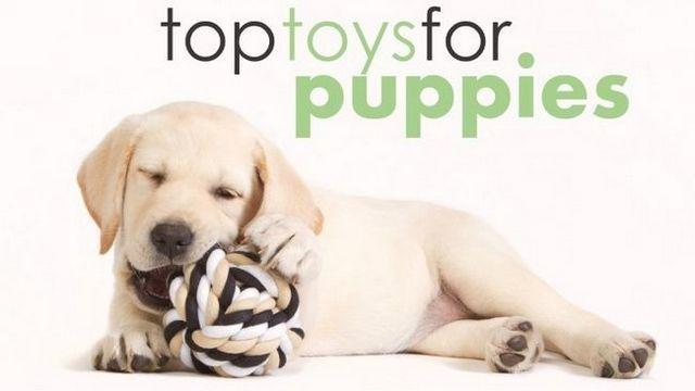 Los mejores juguetes para cachorros: ayudan a conseguir que la energía!