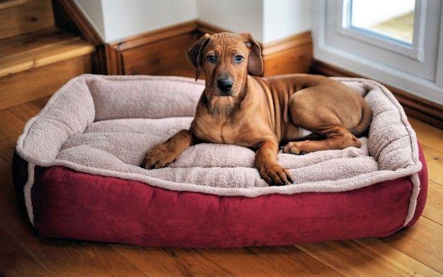 Big Lots agregará una nueva línea de productos para perros Desde el AKC para sus estantes