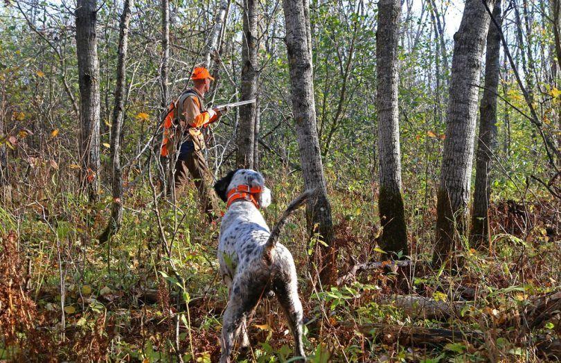 perro del cazador de aves