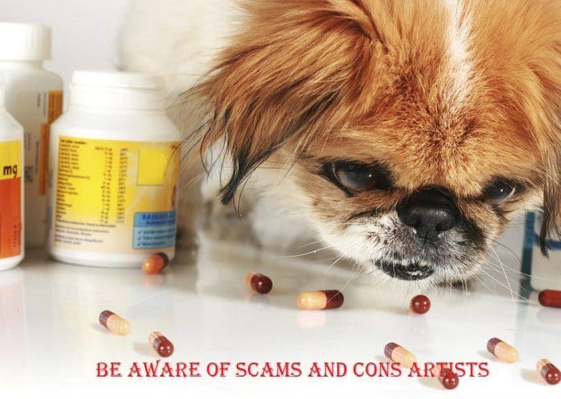 Perro con las píldoras