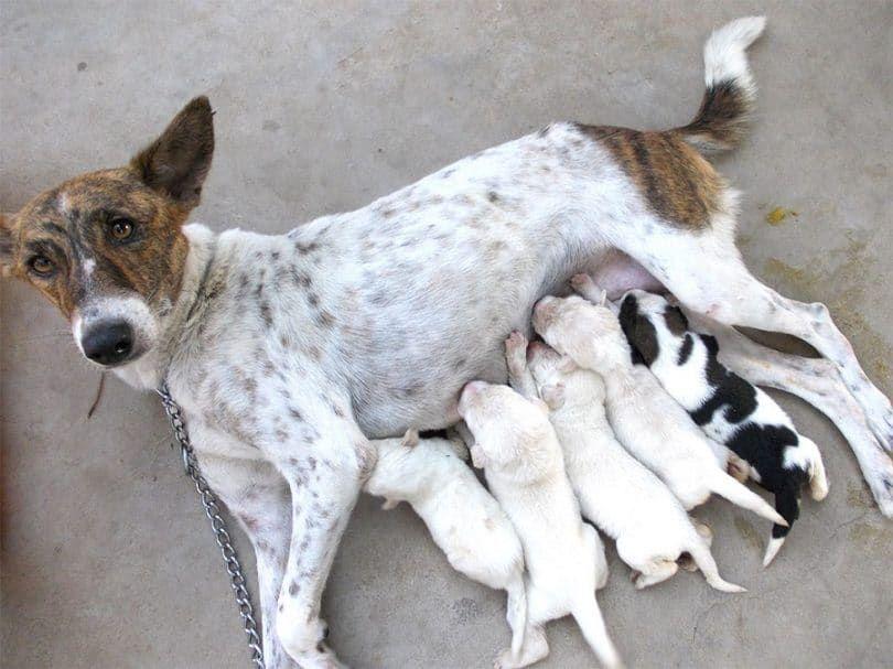 Una gran cantidad de cachorros
