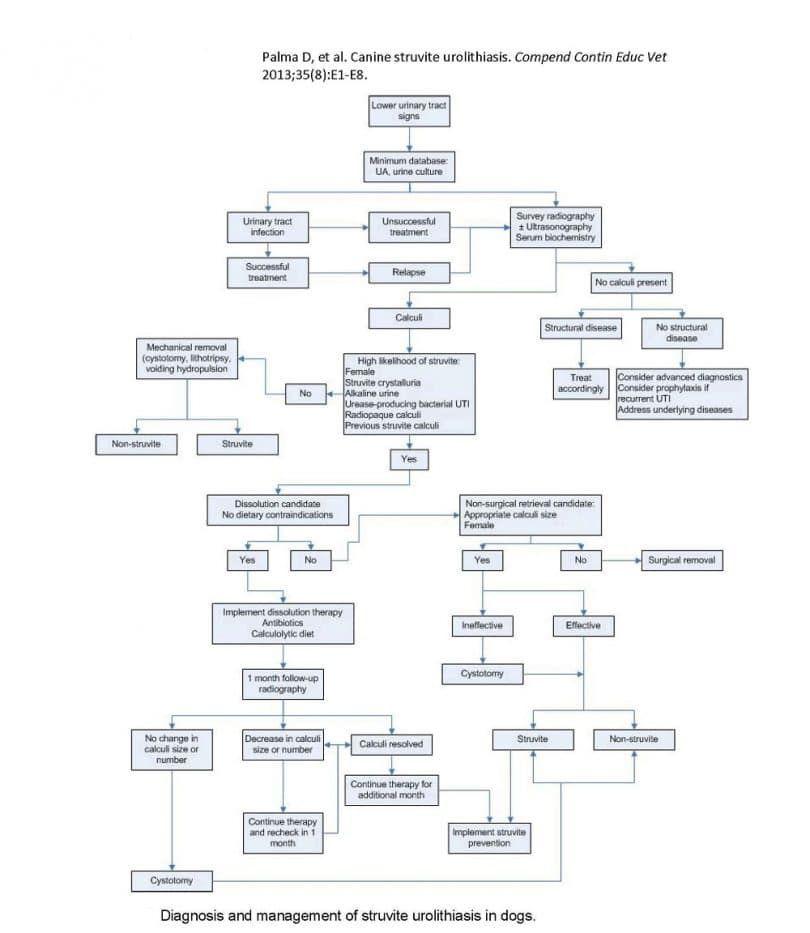Diagnsis y gestión de canino-estruvita-urolitiasis