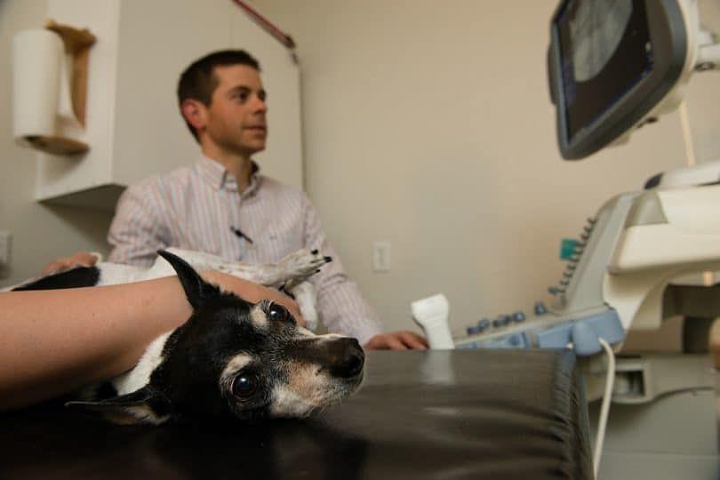 exámenes radiológicos para perros
