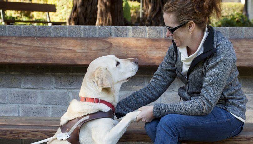 perro ciego utiliza olfato para encontrar el propietario