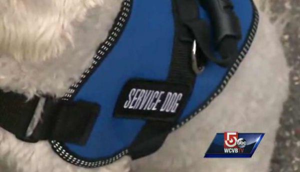 Boston bombardeo sobreviviente y su perro de servicio expulsados de la tienda tj maxx