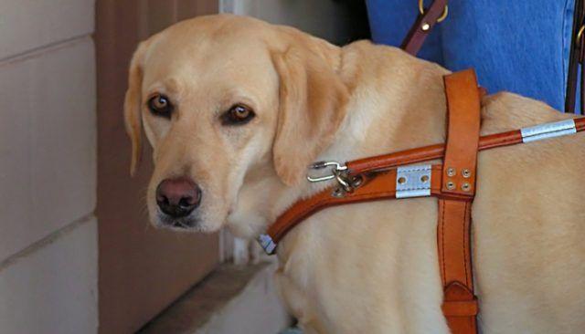 El muchacho que sufre de Síndrome de Down y autismo confía en perros de servicio