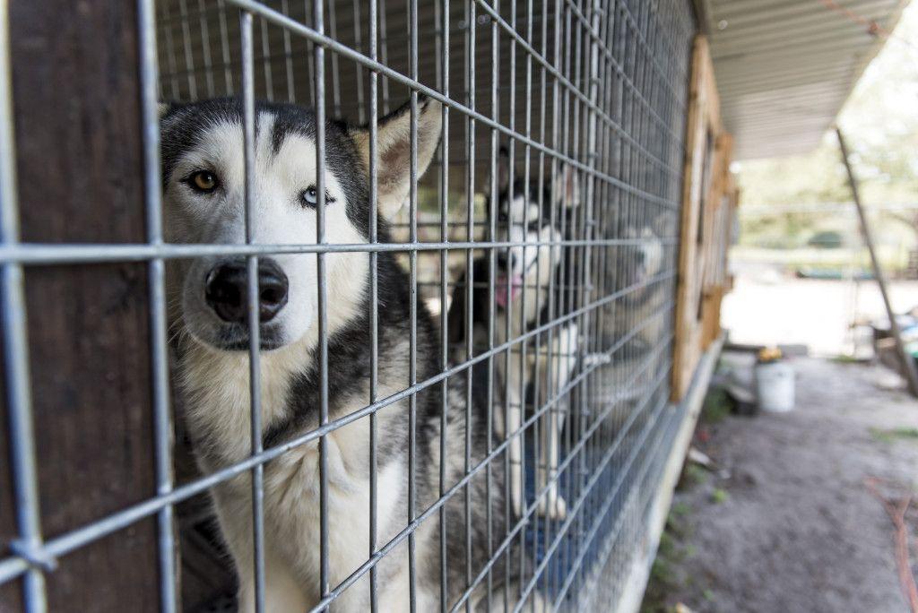 Fuente de la imagen: ASPCA