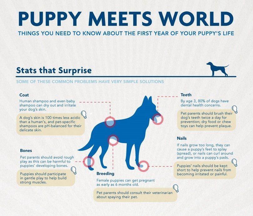 Cachorro se encuentra con la infografГa Mundial
