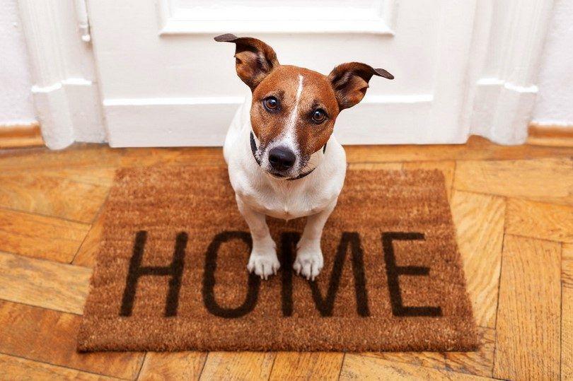 Traer un nuevo perro a casa: cosas que usted necesita saber antes de que la familia se hace más grande