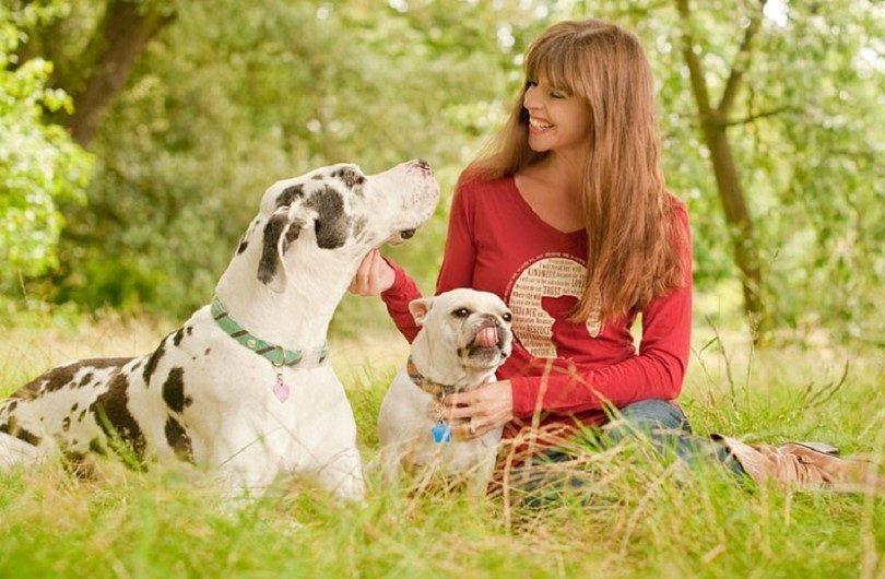 Los perros en el parque