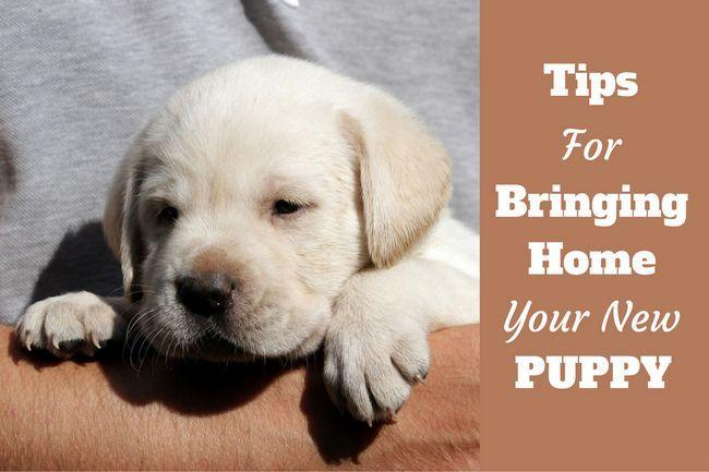 Llevar a casa un nuevo cachorro: Un hombre con un nuevo cachorro en sus brazos