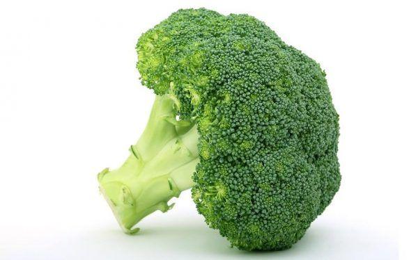 Brócoli para perros: el brócoli es bueno para los perros?