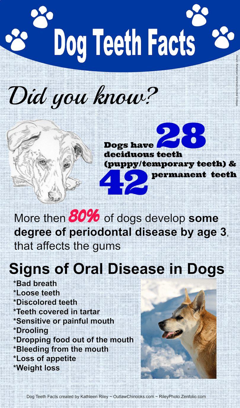hechos dientes de perro infografía