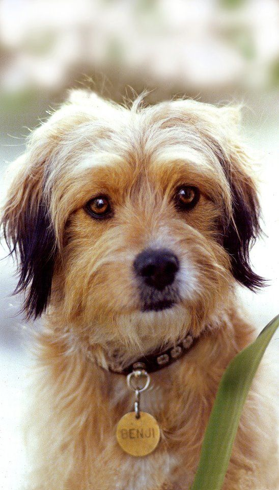 Llamando a todos los perros callejeros! Podría su perro será el próximo `benji`?