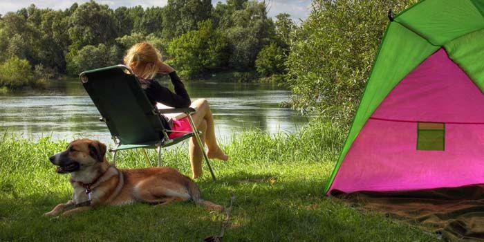 Cómo ir a acampar con Perros