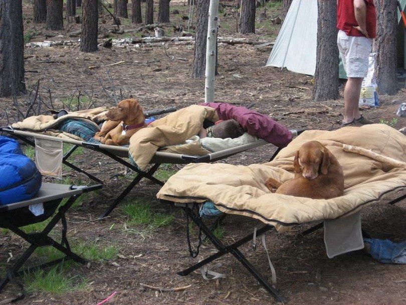 perros de camping