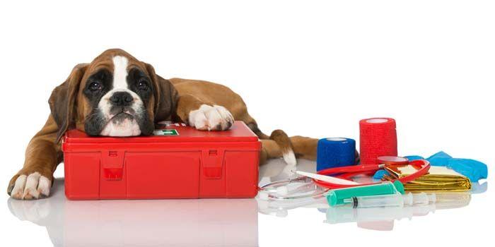 Kit de camping Perros de primeros auxilios para el perro
