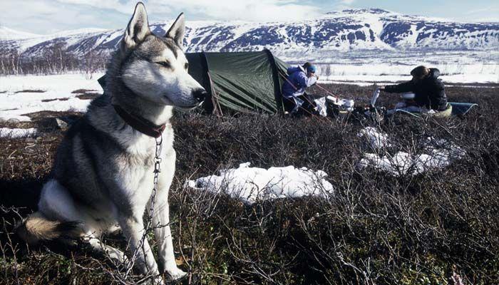 El acampar con su perro y lo dejó fuera de la tienda