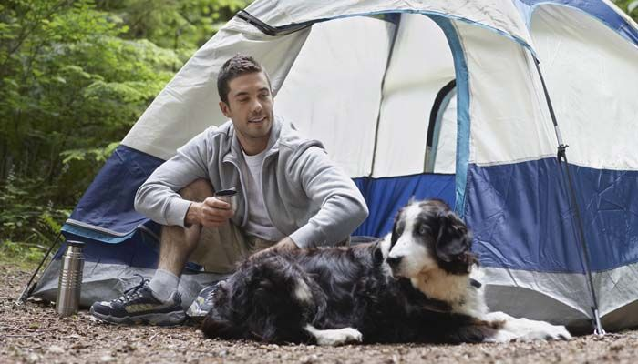 Camping con perros en una tienda de campaña al aire libre