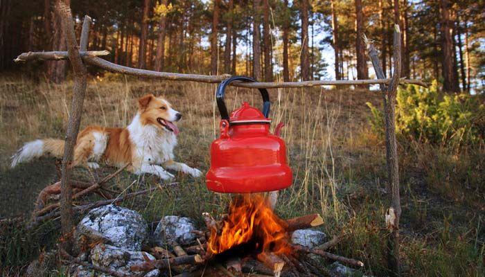 Acampar perros cerca de la fogata