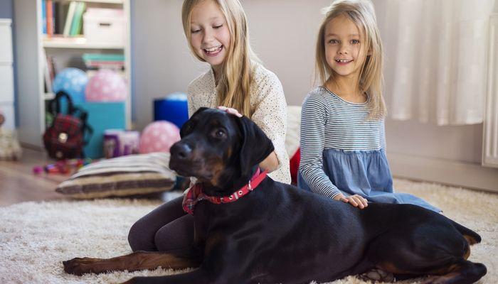 ВїPueden los niГ±os ayudan a reducir la ansiedad del perro