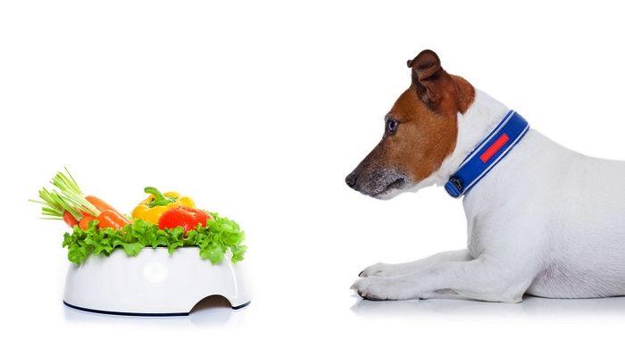 Pueden los perros van vegano